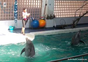 dans delfini