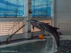 delfini sincron