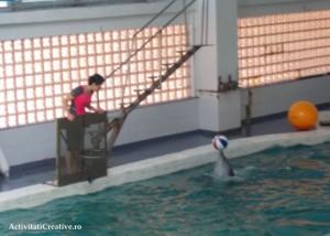 delfini_mingea